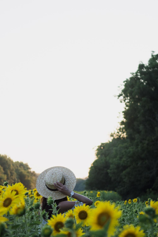 mckee beshers sunflowers maryland