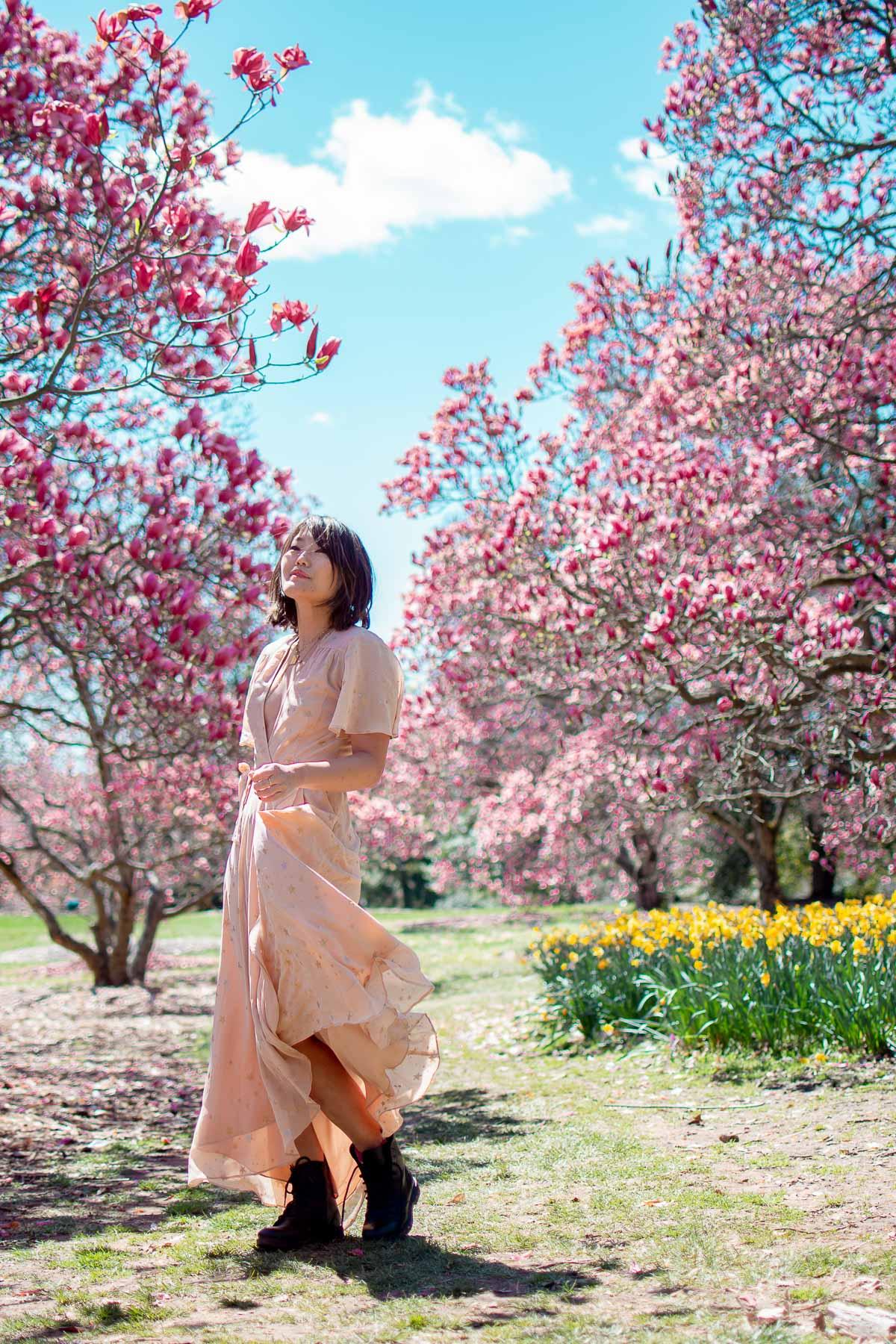 national arboretum cherry blossoms