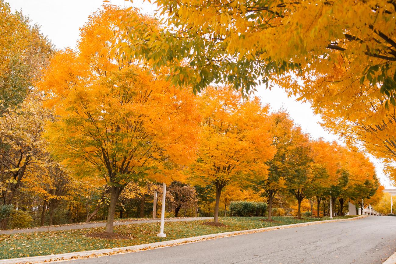fall leaves dc