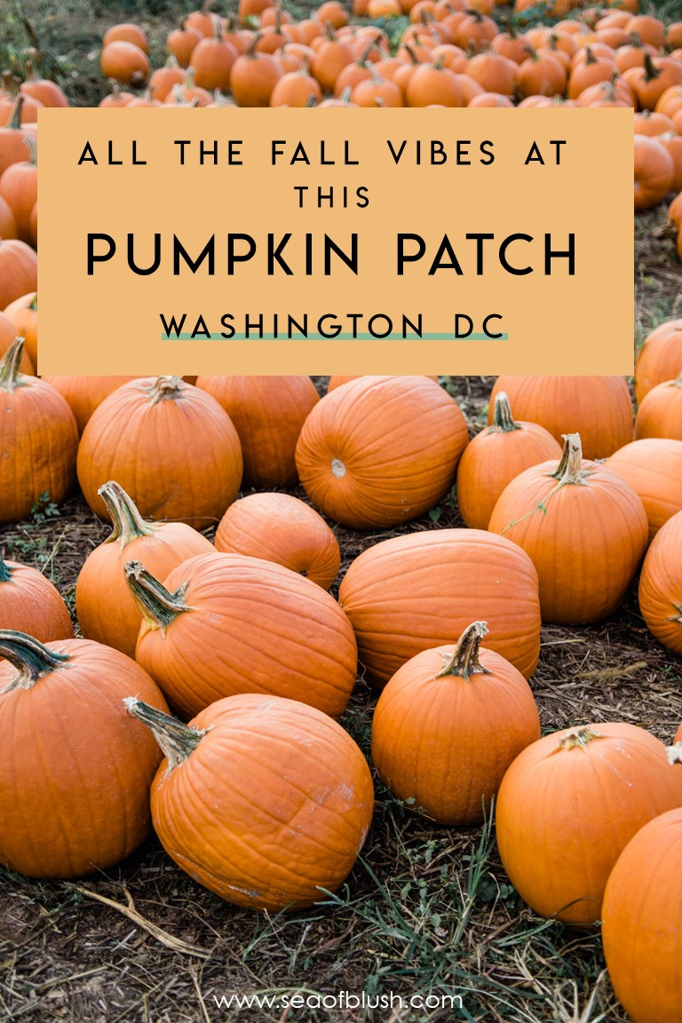 pumpkin patch dc maryland