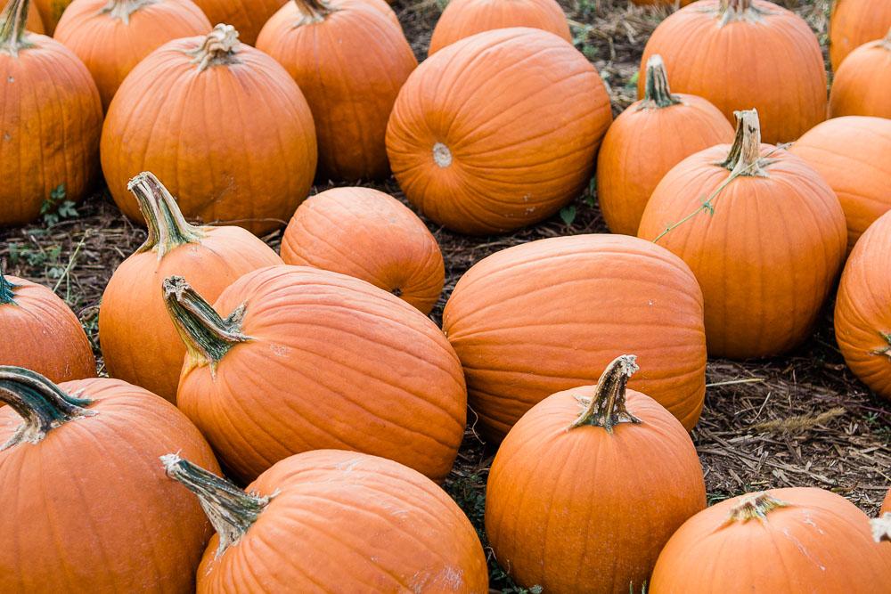 pumpkin patch dc