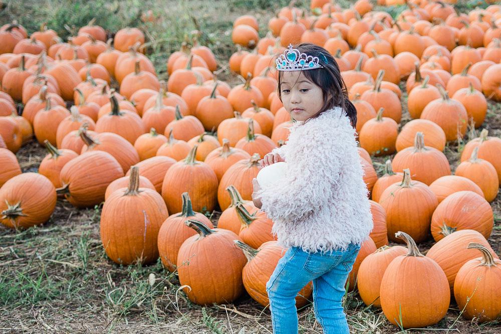 pumpkin patch maryland