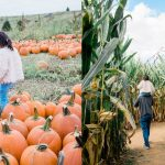 Gaver Farm's 7 Acre Corn Maze is the Perfect Fall Festival Activity in Maryland