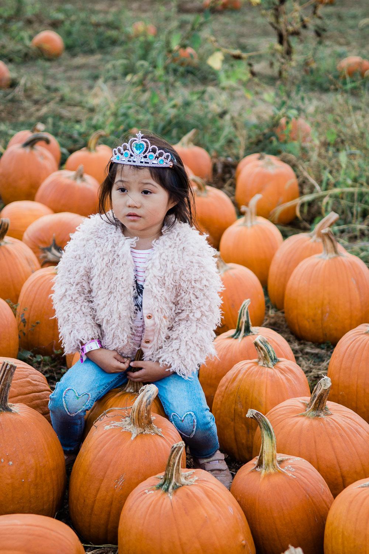 pumpkin patch washington dc