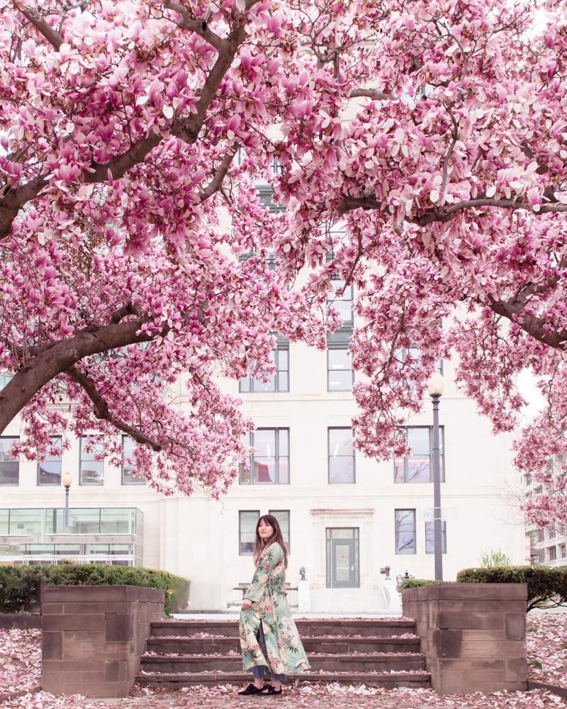 magnolias dc