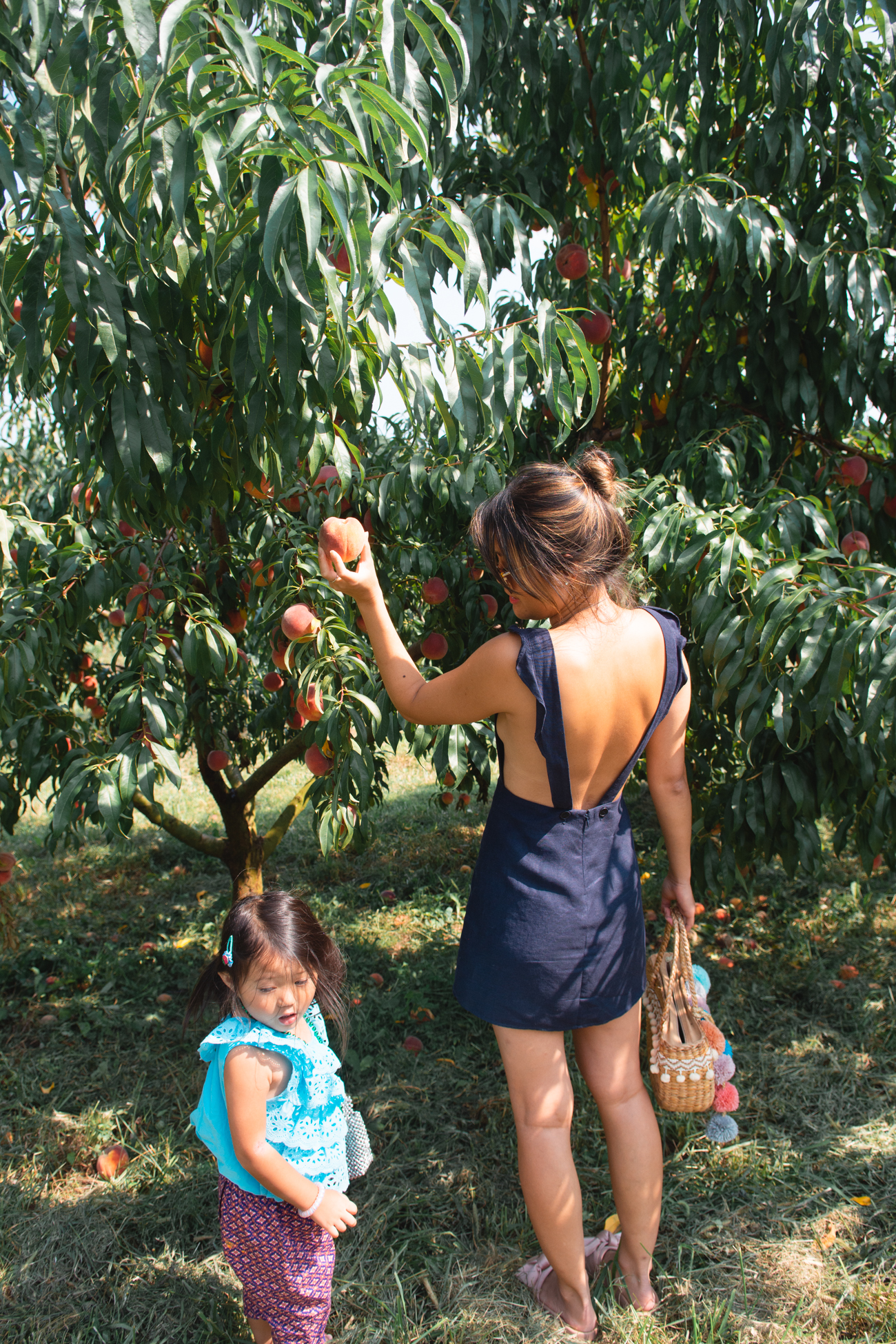 rock hill orchard