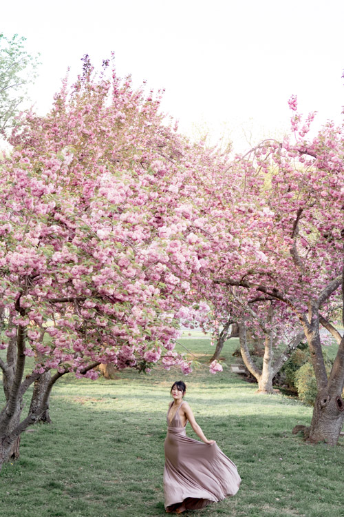 rockville cherry blossom engagement photographer