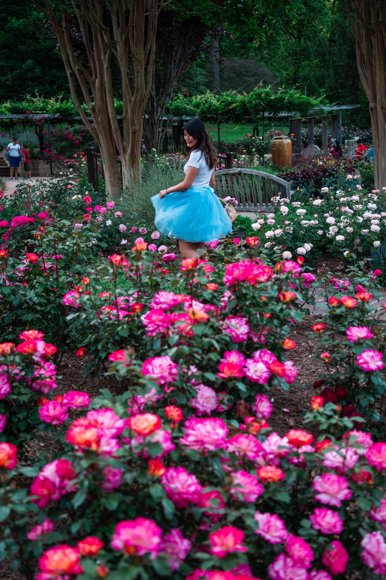rose garden dc