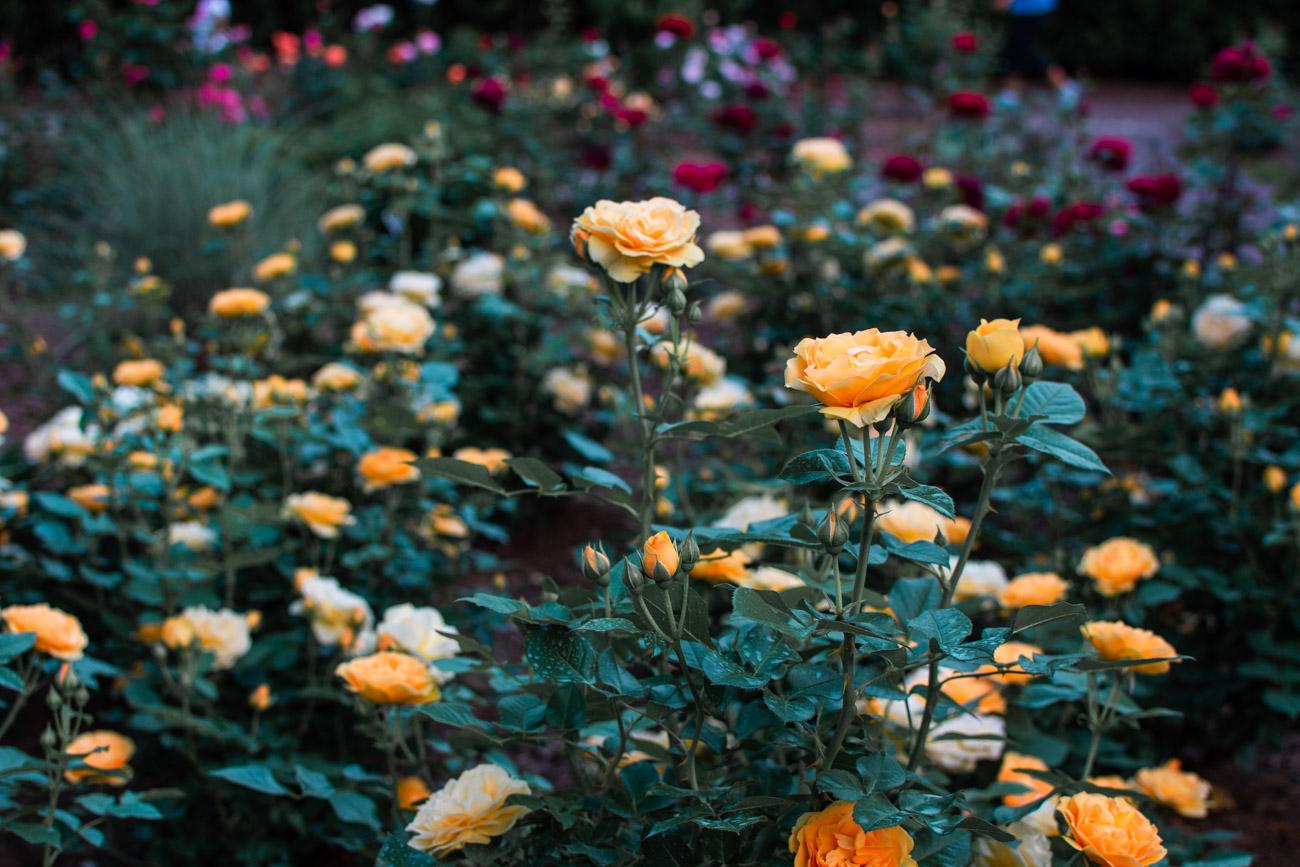 flower garden dc may