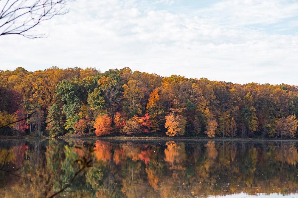 seneca creek state park autumn