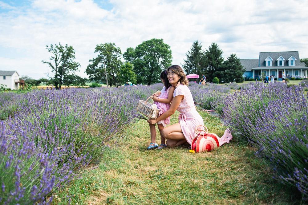 seven oaks lavender farm va