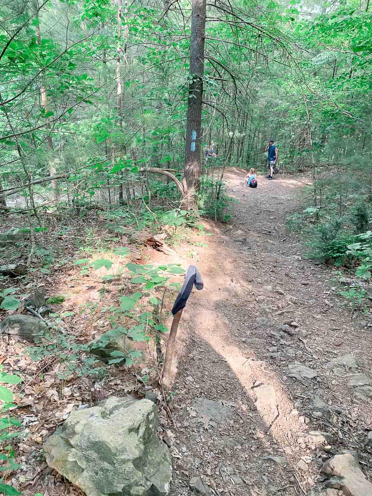 shenandoah hike trail to waterfall