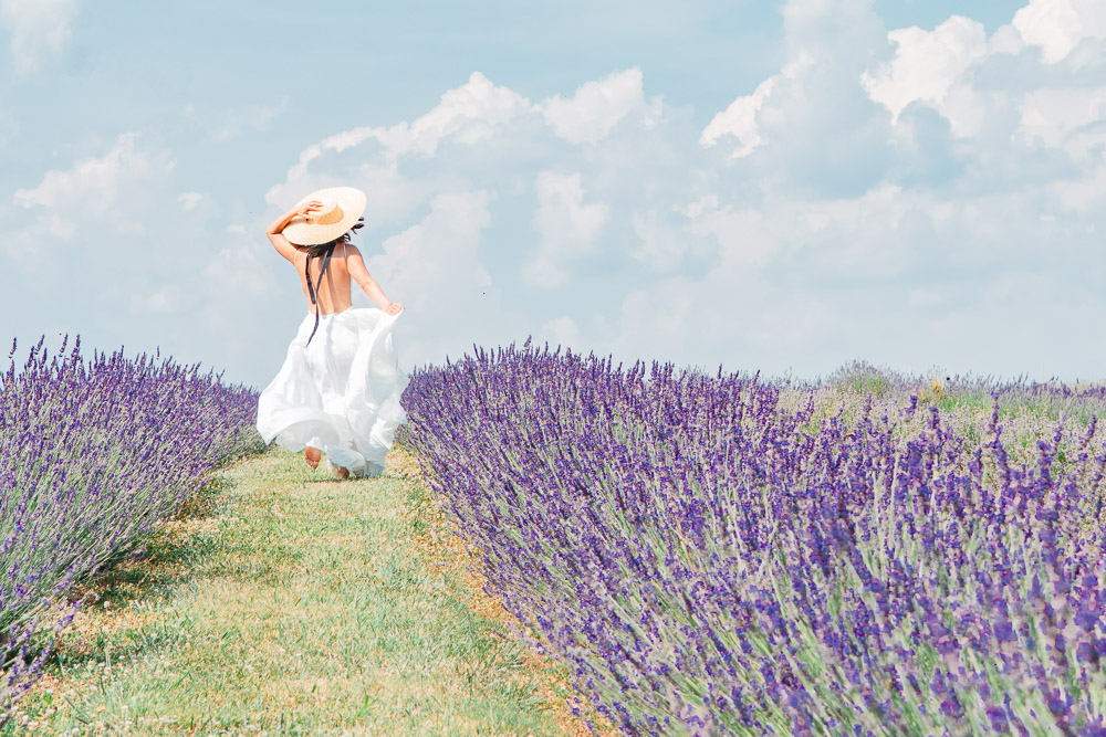 springfield manor lavender festival maryland