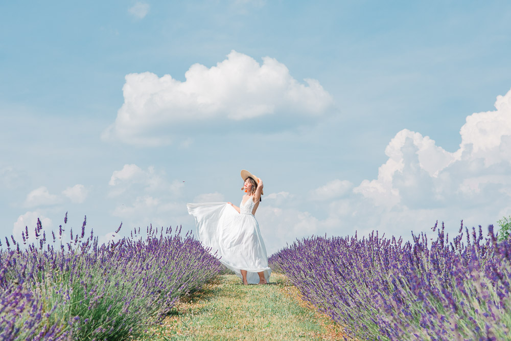 springfield manor lavender farm marylnd