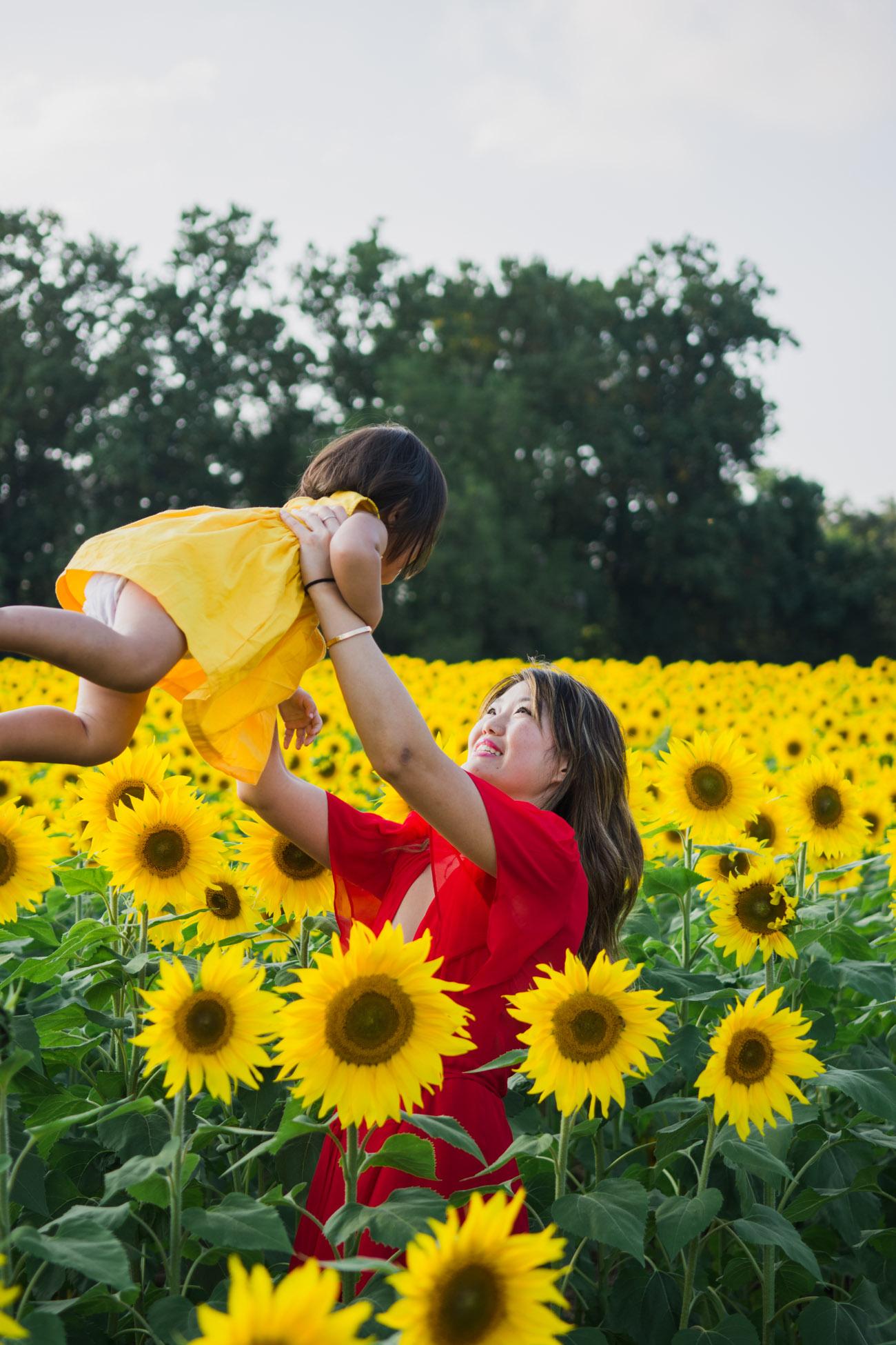 sunflower field photographer maryland