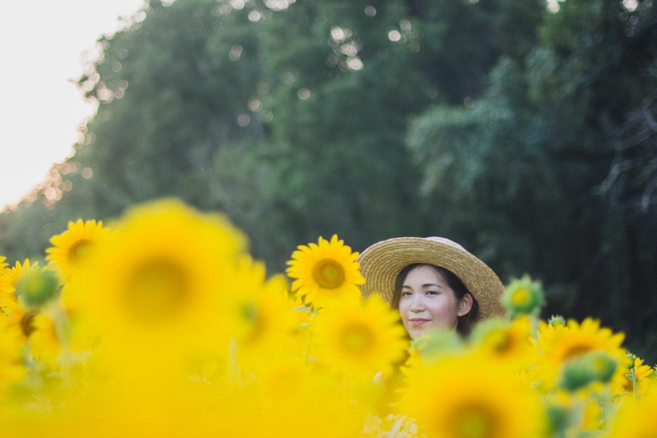 mckee besher sunflowers
