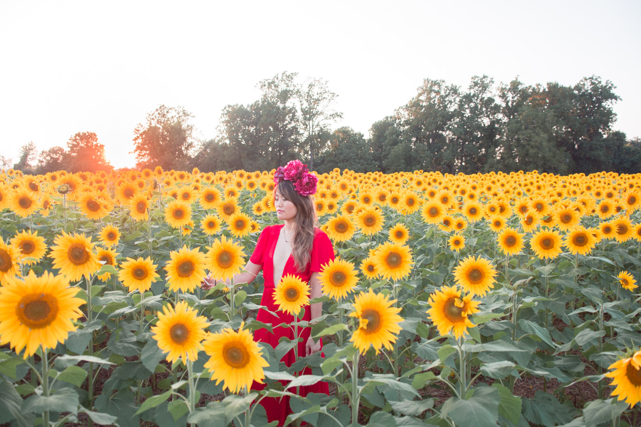 sunflower fields in maryland