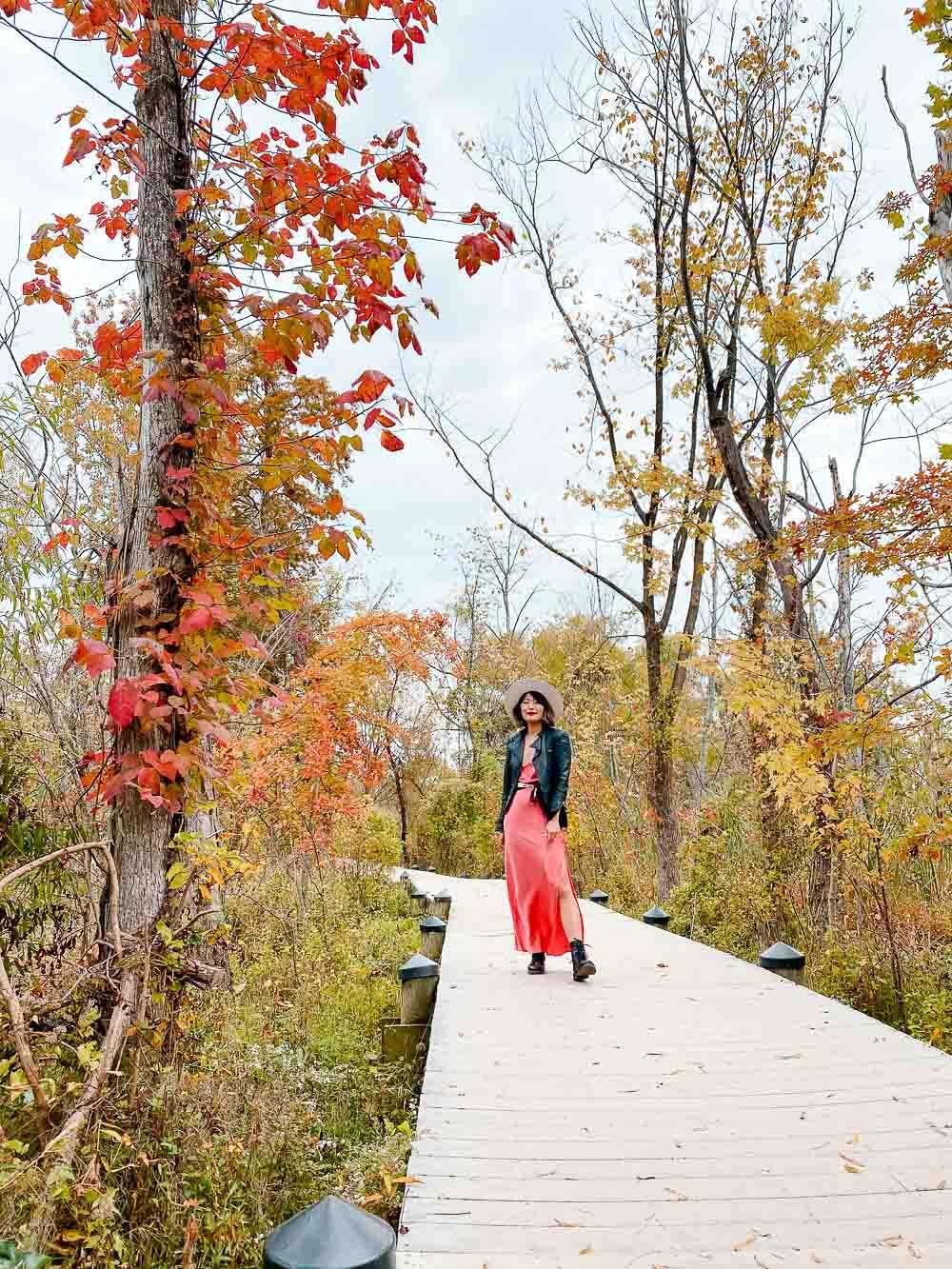washington dc fall foliage