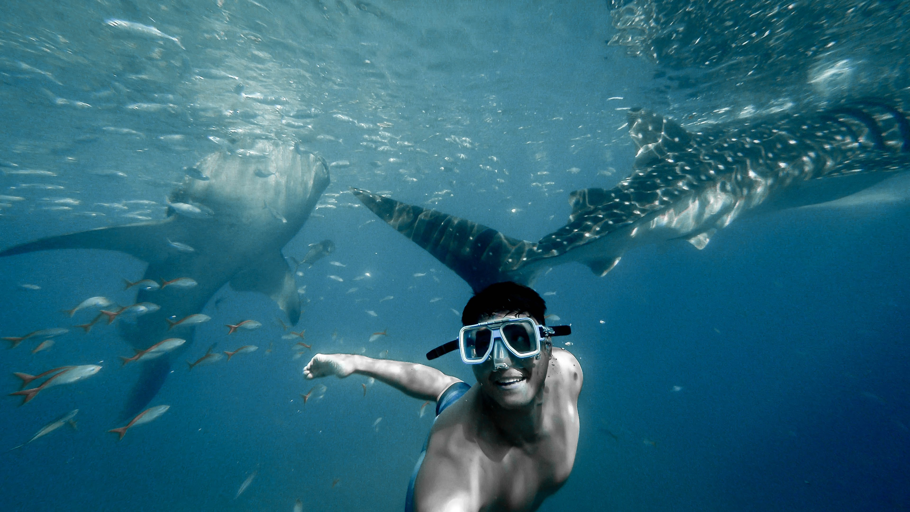 swim with whale sharks cancun