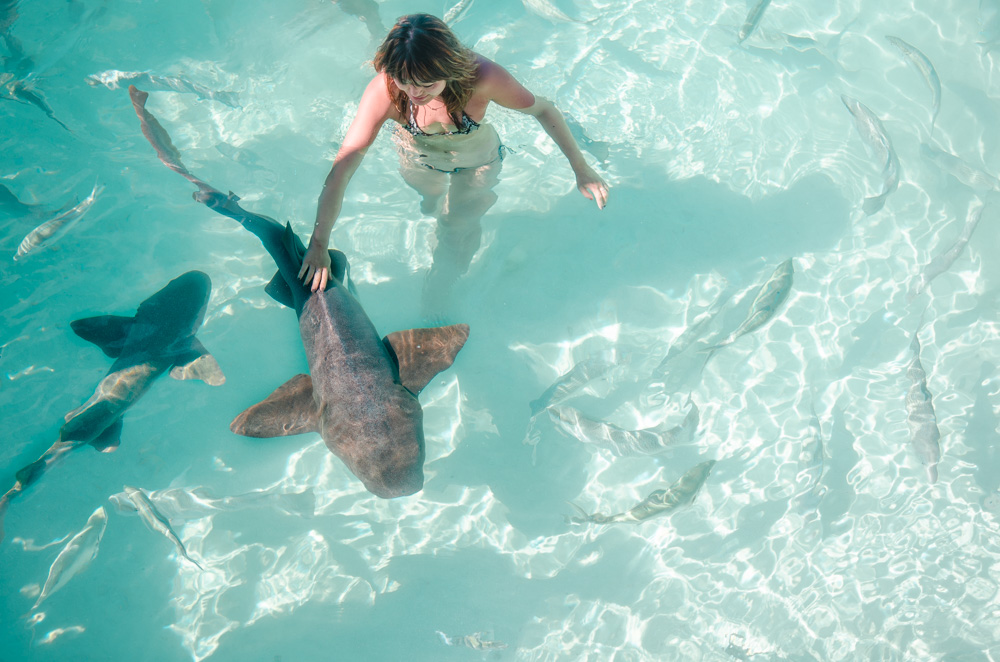 swimming with sharks exumas