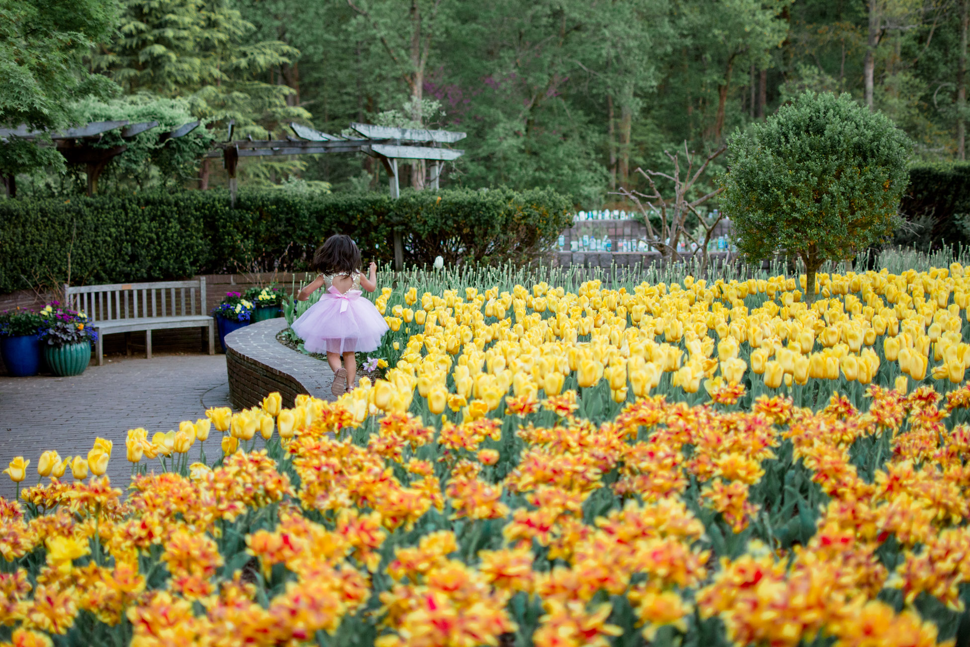 where to see tulips dc