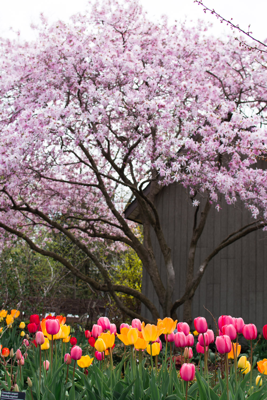 montreal garden