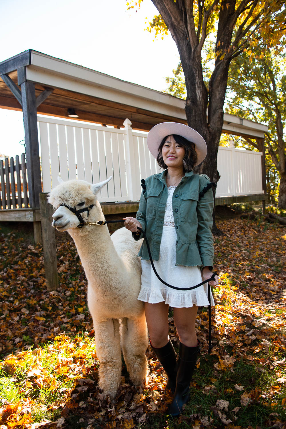 walk an alpaca virginia