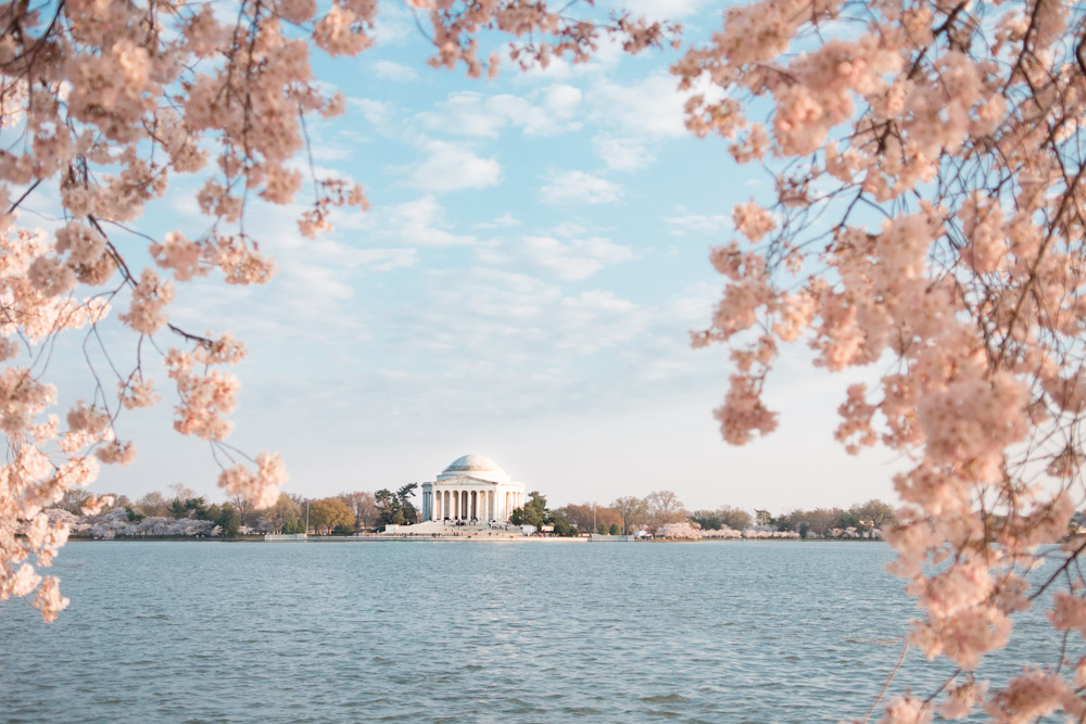 10 Tips for Washington DC Cherry Blossom Festival