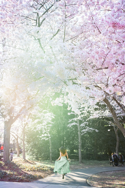 cherry blossoms Roosevelt memorial