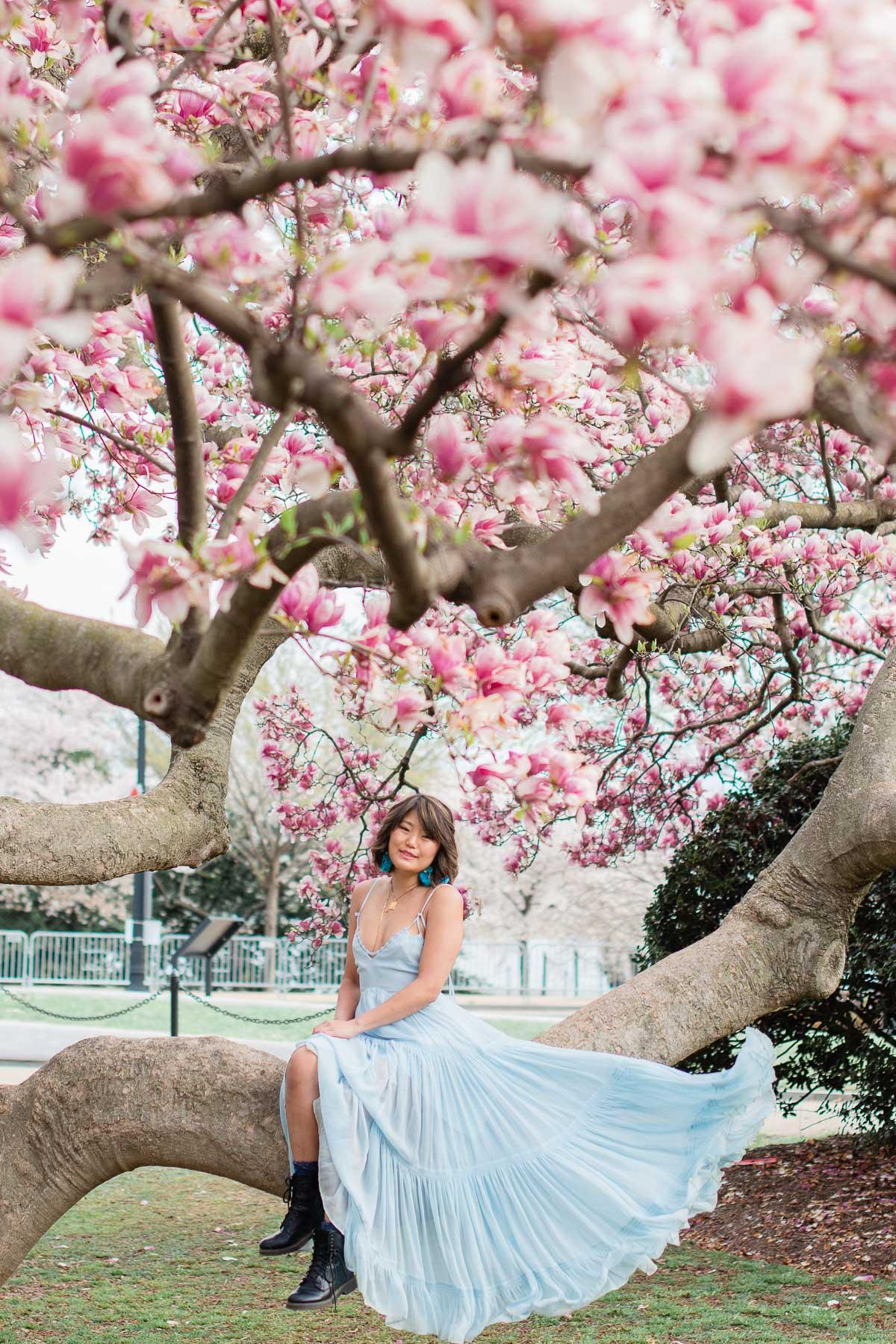 washington dc saucer magnolias 2021