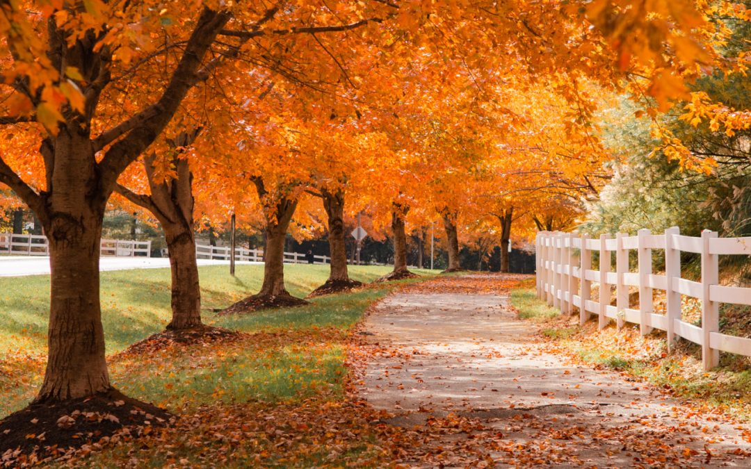 5 Places to See Beautiful Fall Foliage in the Washington DC Area