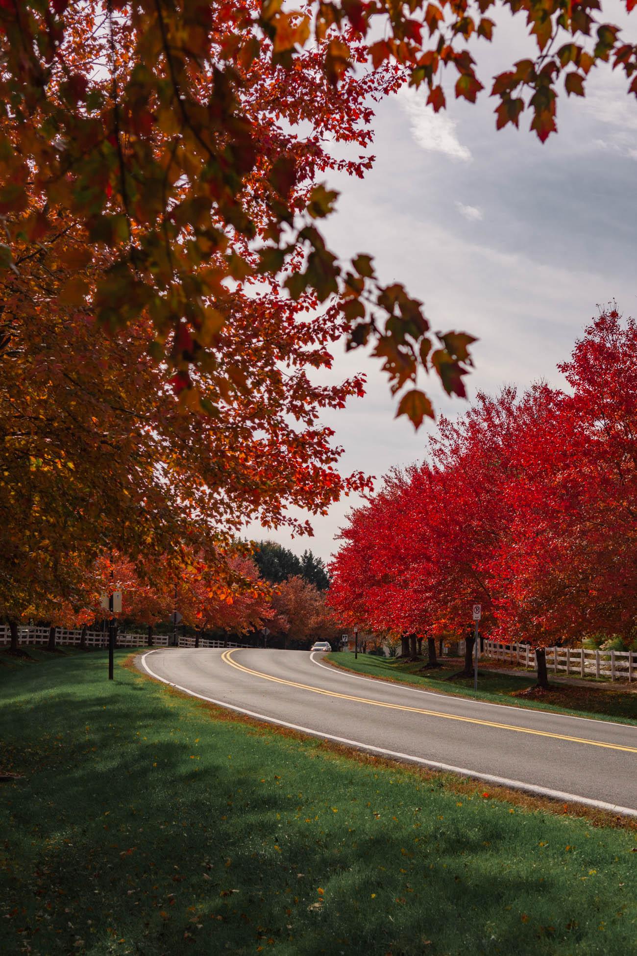 autumn color dc