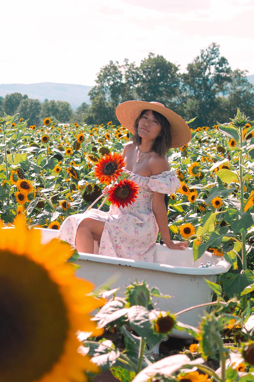 winterboork farms sunflowers